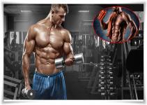 integratori per muscolare